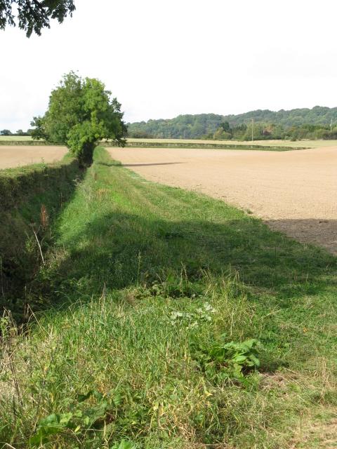 Field Ditch, Park Farm