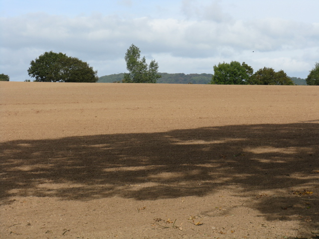 Bare Field, Park Farm