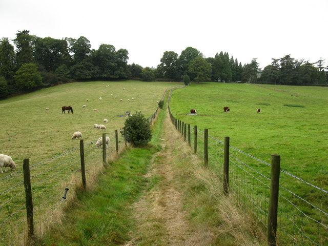 Greensand Way, near Coverwood Farm