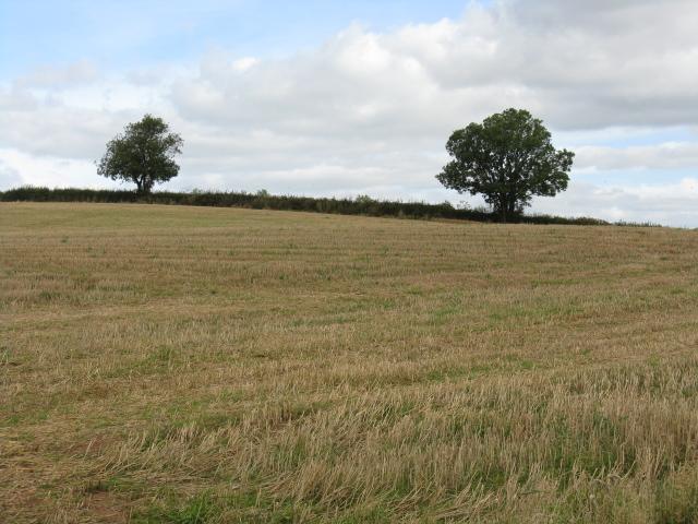Harvested Field Near Woolstan's Farm