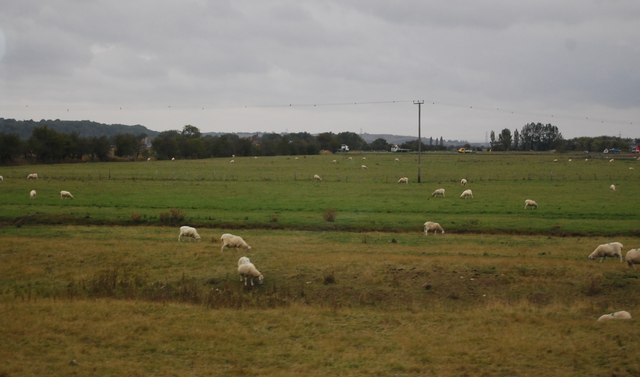 Sheep on rough & improved pasture land