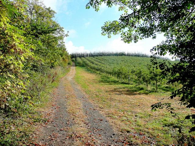 Orchard on Aston Hill