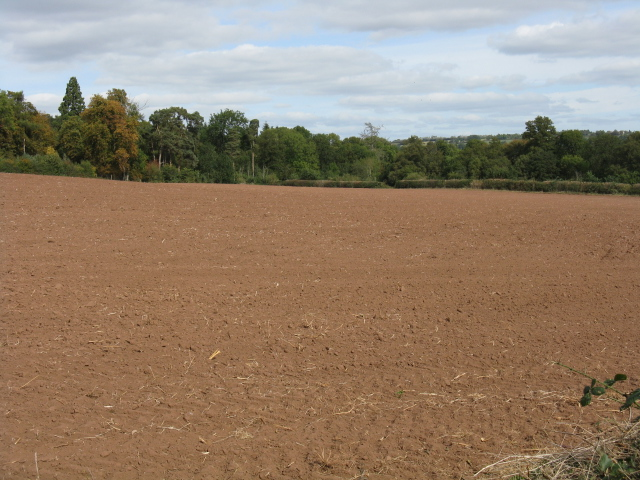 Fields Before Shrawley Wood