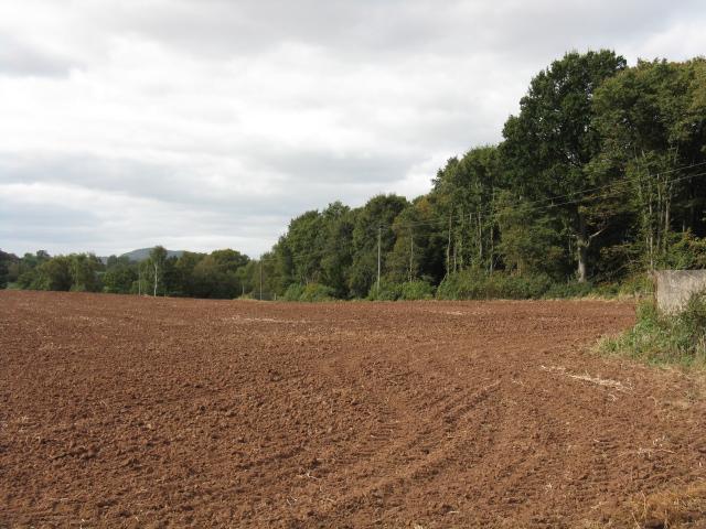 Edge Of Shrawley Woods, Court Farm, Shrawley