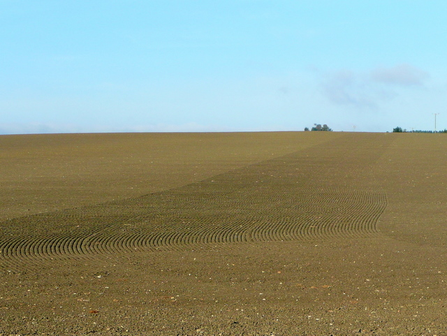 Newly-sown land