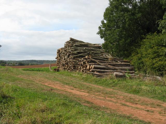 Timber Pile On The Track To Glasshampton