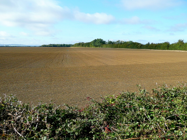 View to Mocho Coppice