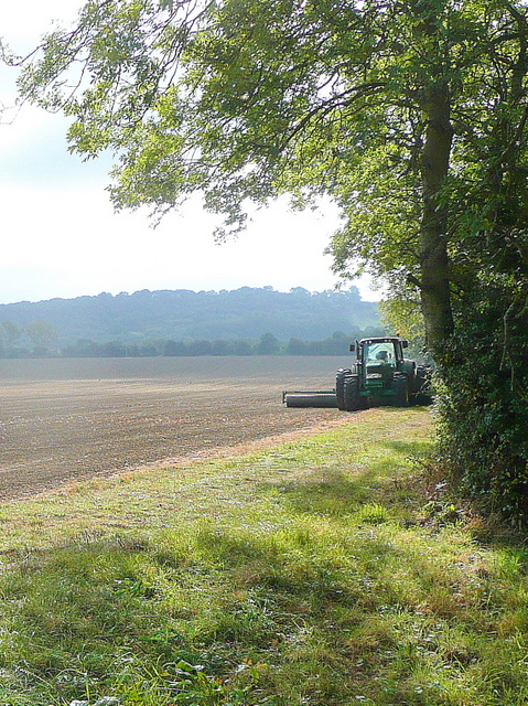 Early-morning cultivating?