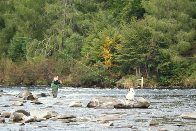 """Presenting a fly in the """"Little Turn""""on the Spey"""