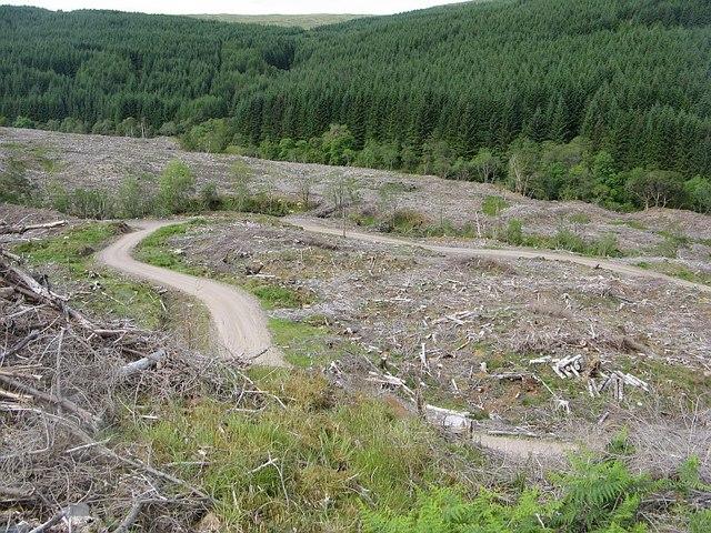 Logging road, Barr