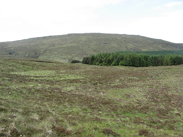Forest edge, Monadh Meadhonach