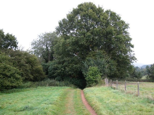 Bridleway to Gomshall