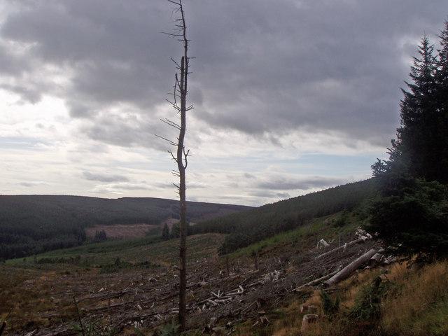 Single tree trunk