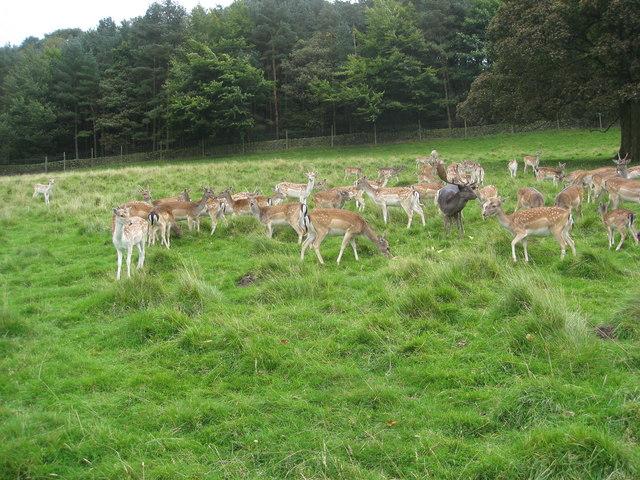 Chestnut Centre - Deer Park