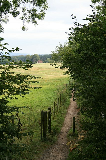 Bridleway at Deerleap Wood