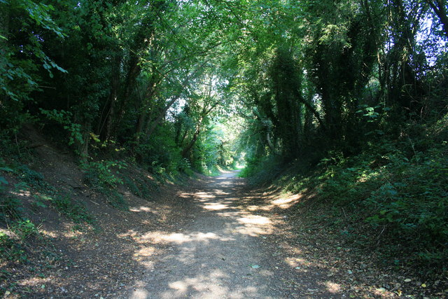 Wooded section of the trailway