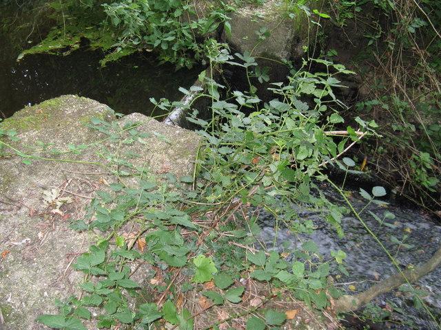 Sluice gate on disused Mill stream