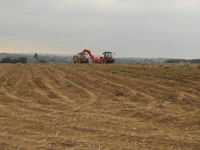 Potato harvest, Norton Sub Hamdon