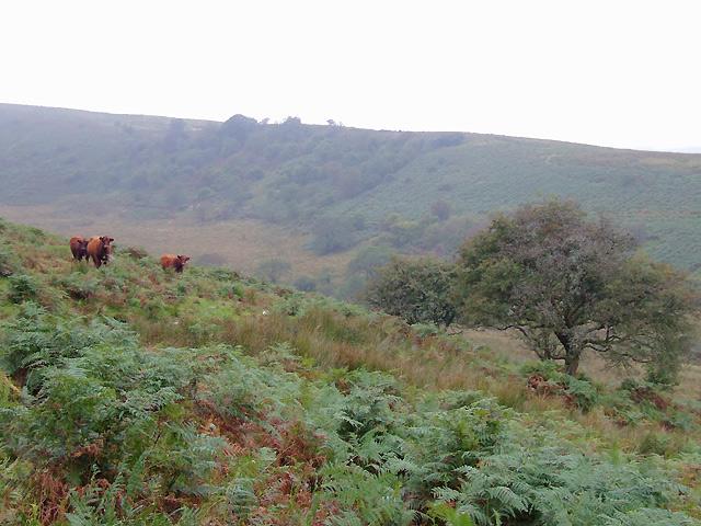 Moorland above Nant y Brain, Powys