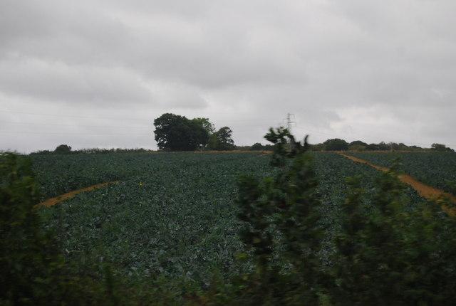 Cabbage field near Rye Foreign