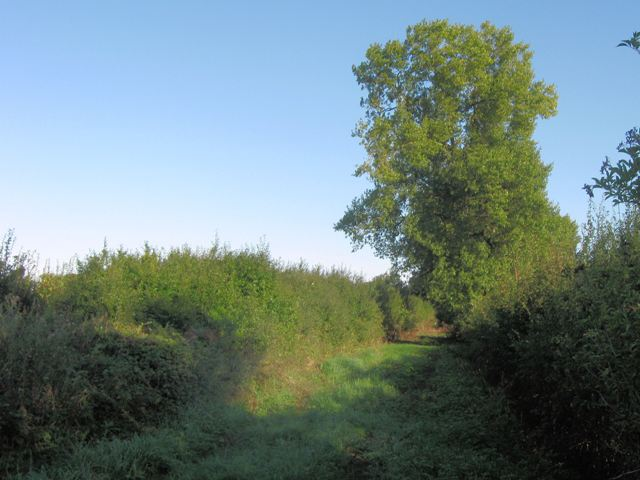 Farm Track North of Puttenham