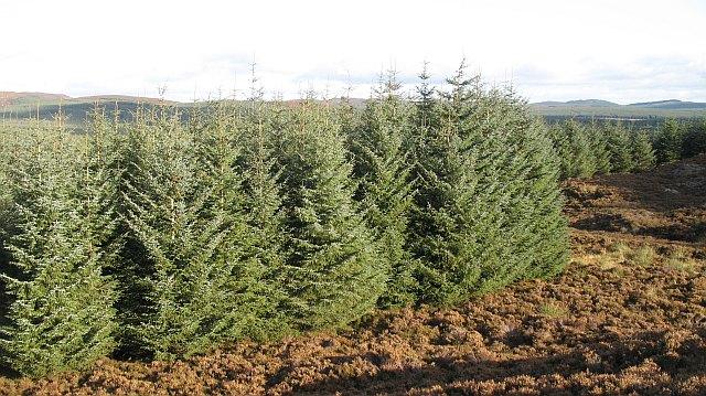 Forest near Creag a' Bhàird
