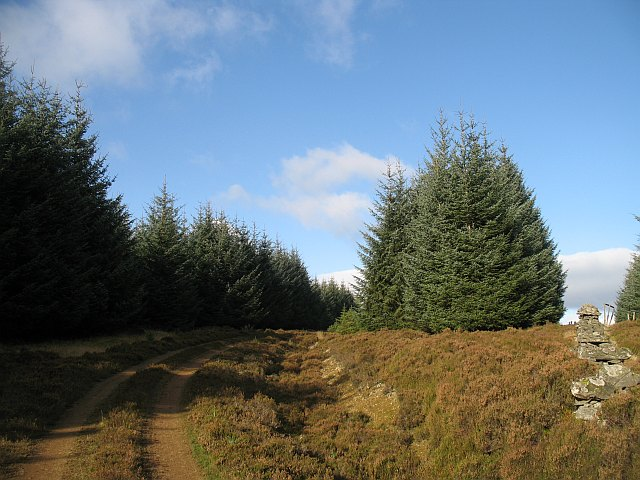 Forest road, Griffin Forest