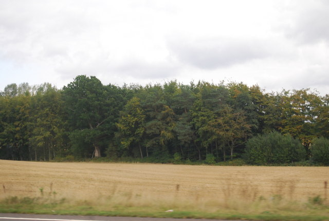 Woodland by the A21, Lamberhurst Bypass
