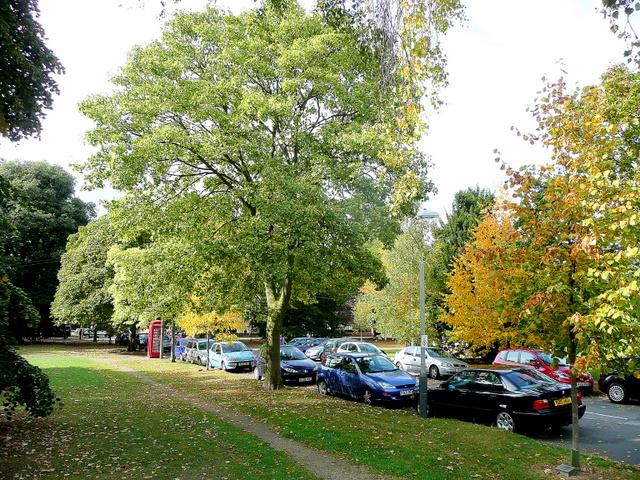 Leafy Pittville 2