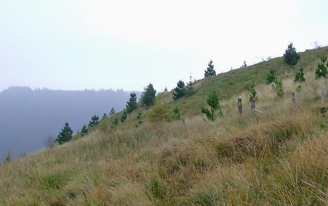 Hillsides above Cwm Irfon, Powys