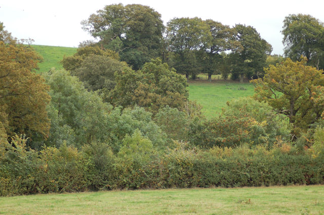 Hillside looking towards Crowthers Coppice