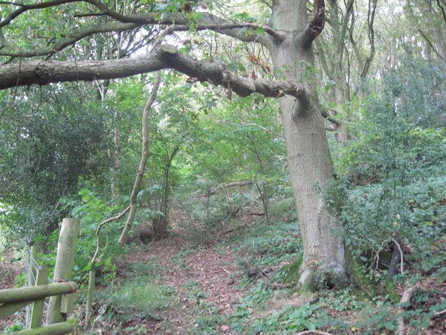 Woodland walk at Gaer Fawr