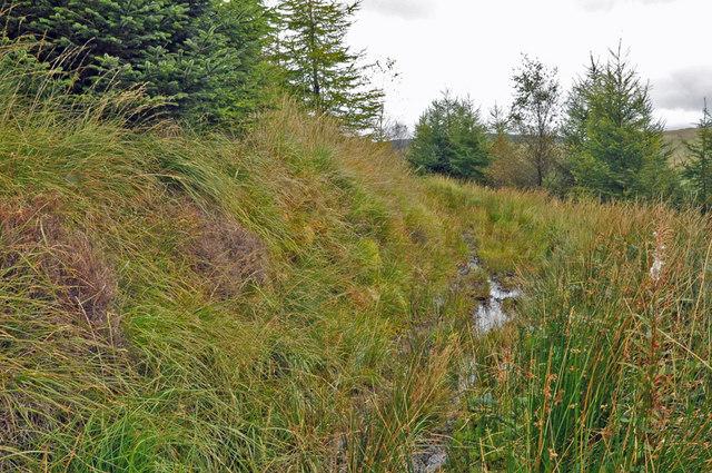 Boggy stretch of mountain bridleway - Glyncorrwg