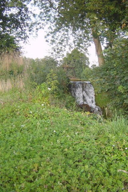 Hothfield 'Waterfall'