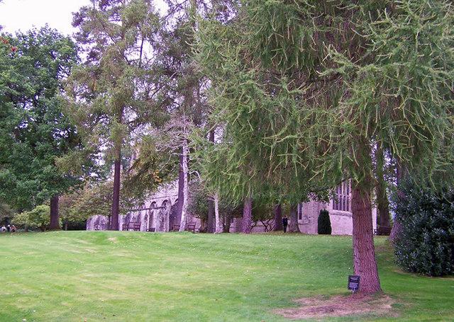 Celebration tree, Dunkeld Cathedral garden
