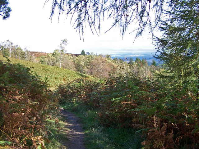 Birnam Hill path