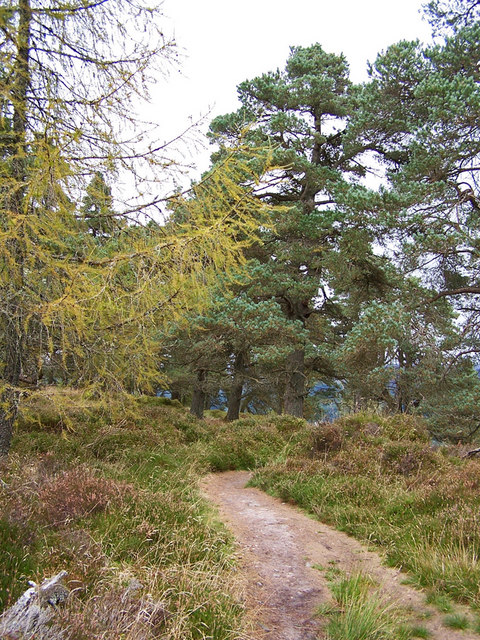 Trees on Birnam Hill