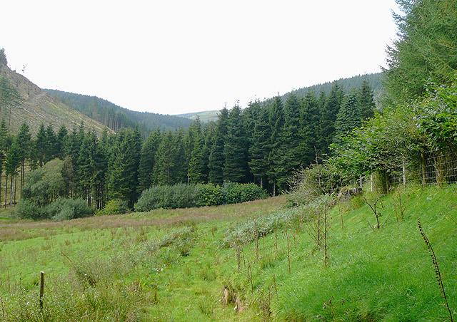 Cwm Cnyffiad, Powys