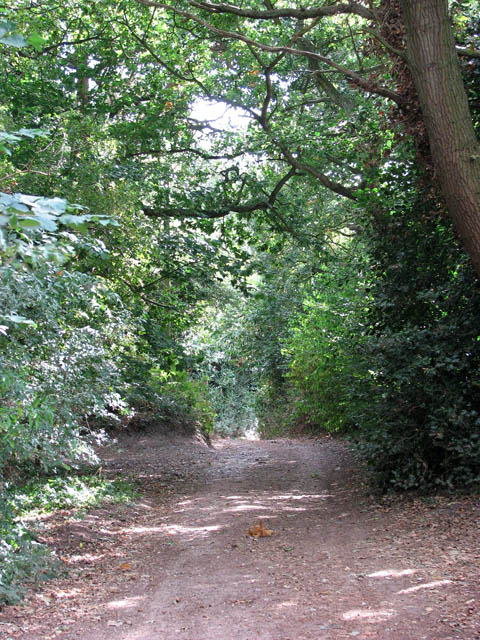 Shady track to Station Road