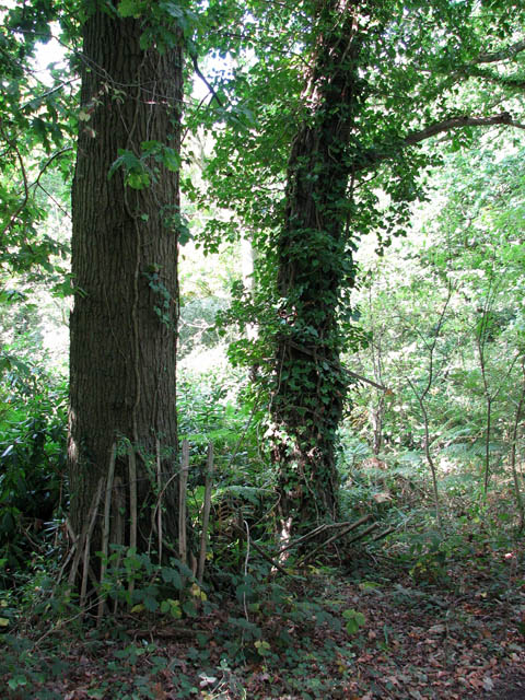Woodland beside the railway line