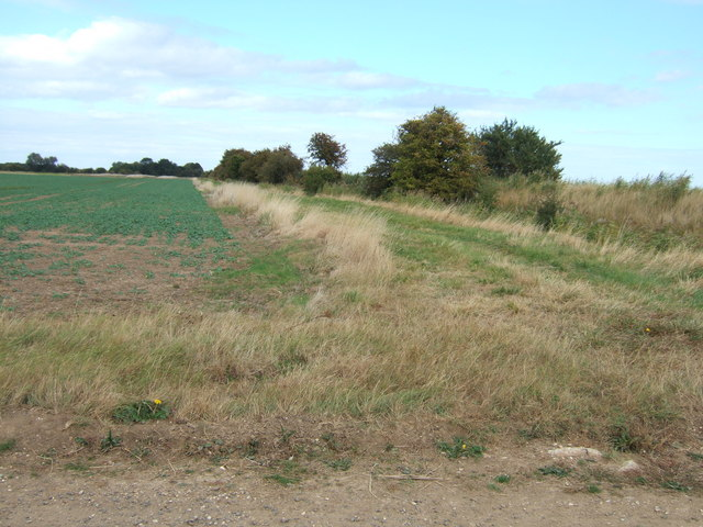 Set-aside environmental strip north of Clenchwarton
