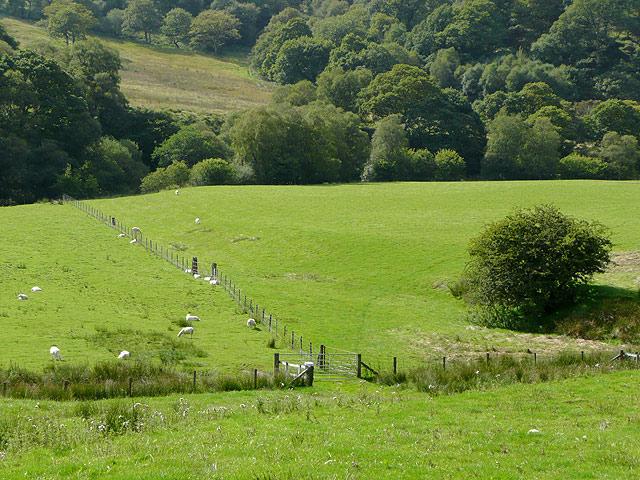 Cwm Irfon pastures near Abergwesyn, Powys