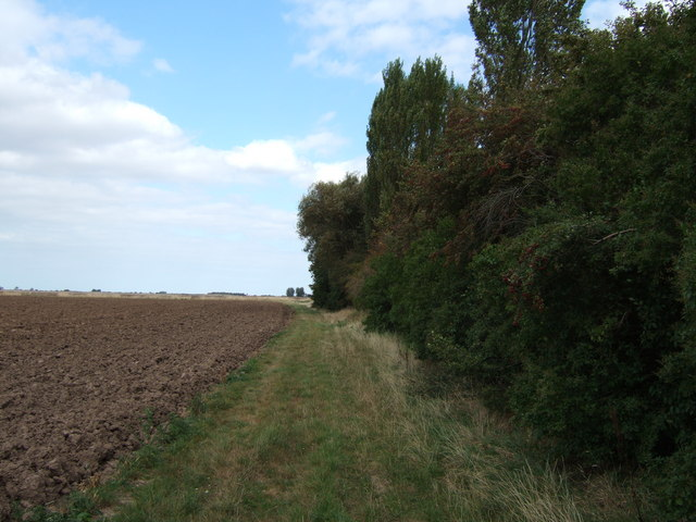 On the edge of a remote copse, north of Clenchwarton