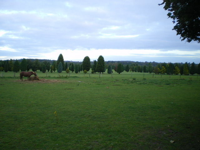 Grazing land and Wergs golf course