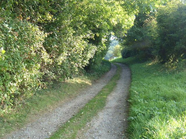 Bridleway to Hawthorn Wood