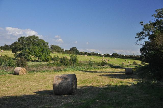 Final harvest - Llanmaes