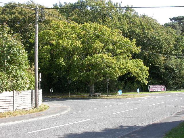 Sway, oak tree