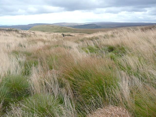 Grassy valley on Buckstones Moss, Marsden