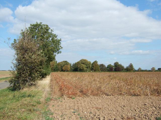 Looking towards Pierrepont Farm
