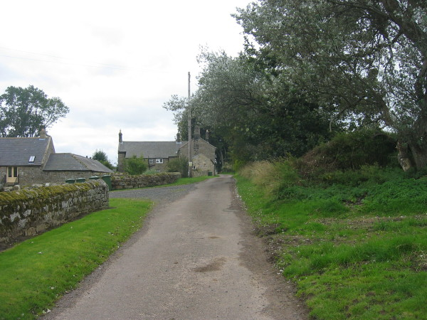 Road from Harehope Farm
